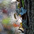 Bluszczowo ... #bluszcz #drzewo #bokeh