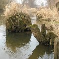 Eletrownia wodna na rzece Wieprz w Michalowie, korzenie starych drzew #Michalów #ElektrowniaWodna #Wieprz