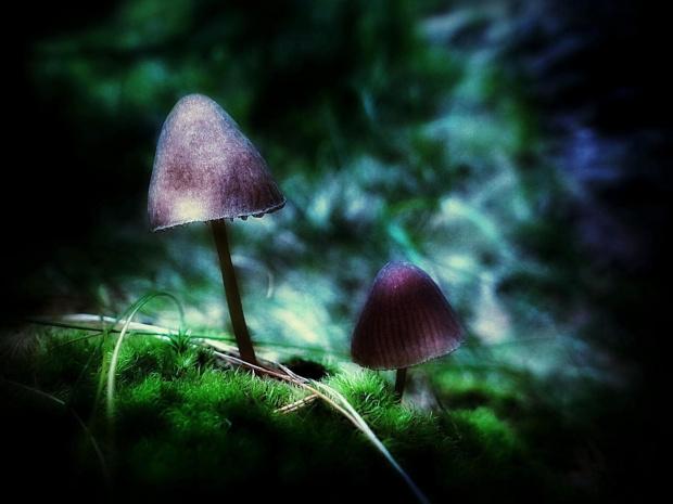 Grzybki #grzyby #las