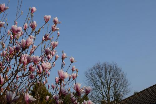 ... #magnolia #przyroda #wiosna