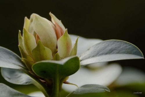 drobiazgi ... #ogród #rośliny #wiosna