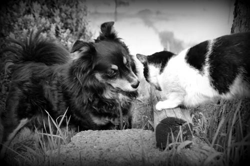 Jak pies z kotem. Moje zwierzaczki.