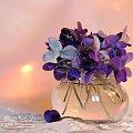 Wiosennie #fiołki #krokusy #kwiaty #wiosn
