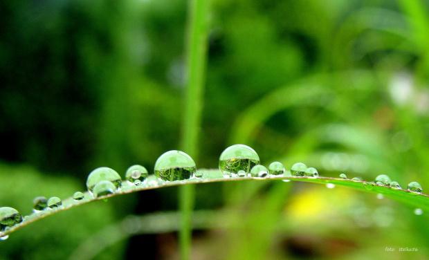 kropelkowo ... :)) **** ulub. gonzki **** #deszcz #kropelki #ogród #przyroda #trawy