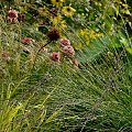 #lato #ogród #przyroda #rośliny