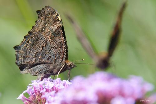 #lato #ogród #owady #przyroda