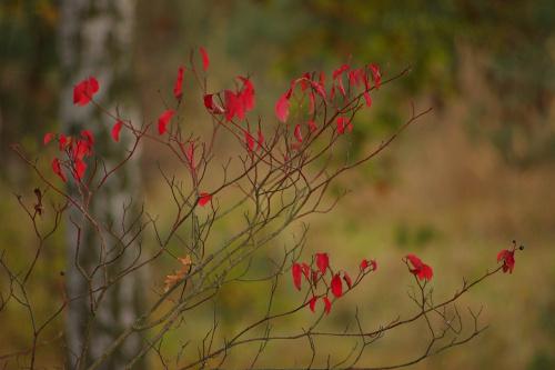 #jesień #liście #natura #Październik2014 #rośliny