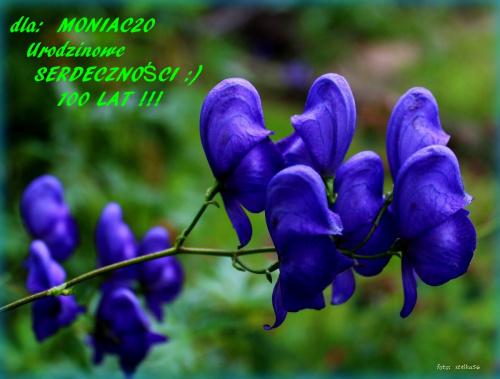 Z radością w przyszłość spójrz i nie martw się na zapas,bo nie przewidzisz wszystkich burzi tylko na próżno stracisz czas ... #kwiaty #oród #tojad #urodziny #życzenia