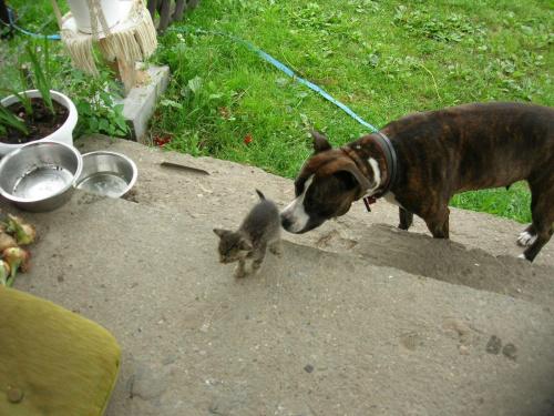 opiekunka kotów