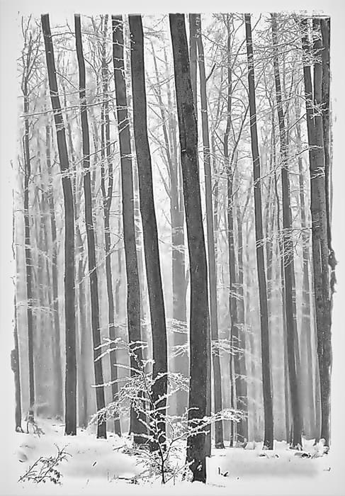 zimowo #las #zima
