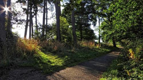 Kings Park..(Glasgow)..