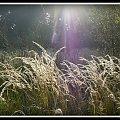 pod swiatlo #krople #pajaki #PrawieJesień