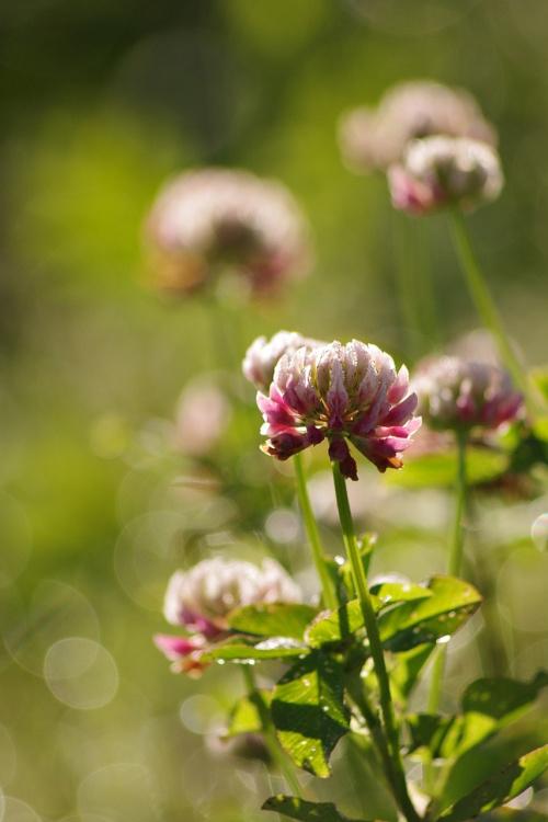 lato z zapasów :) #natura #lato