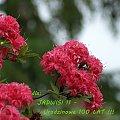 Niech się spełnią Twe marzenia ... #kwiaty #urodziny #wiosna #życzenia
