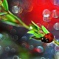 Biedroneczki są w kropeczki #biedronki #owady #ważki