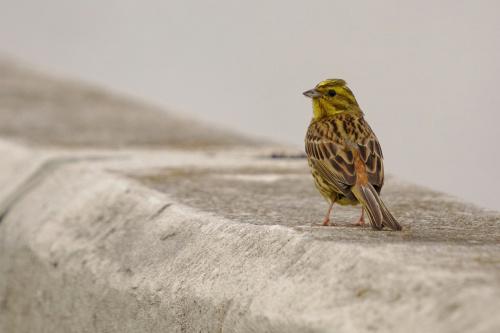 ...bliżej... #ptaki