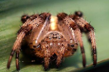 Owady i pająki