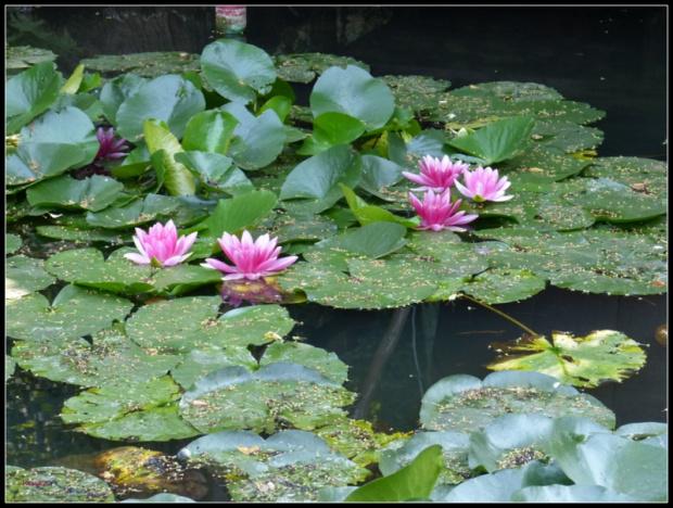 nad wodą #przyroda
